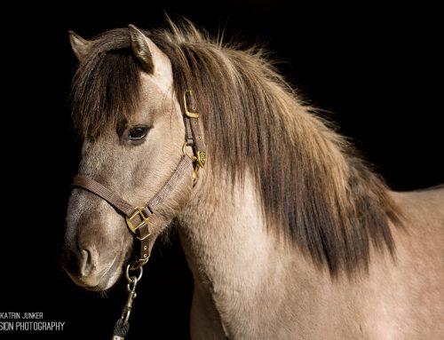 Neue Verkaufspferde